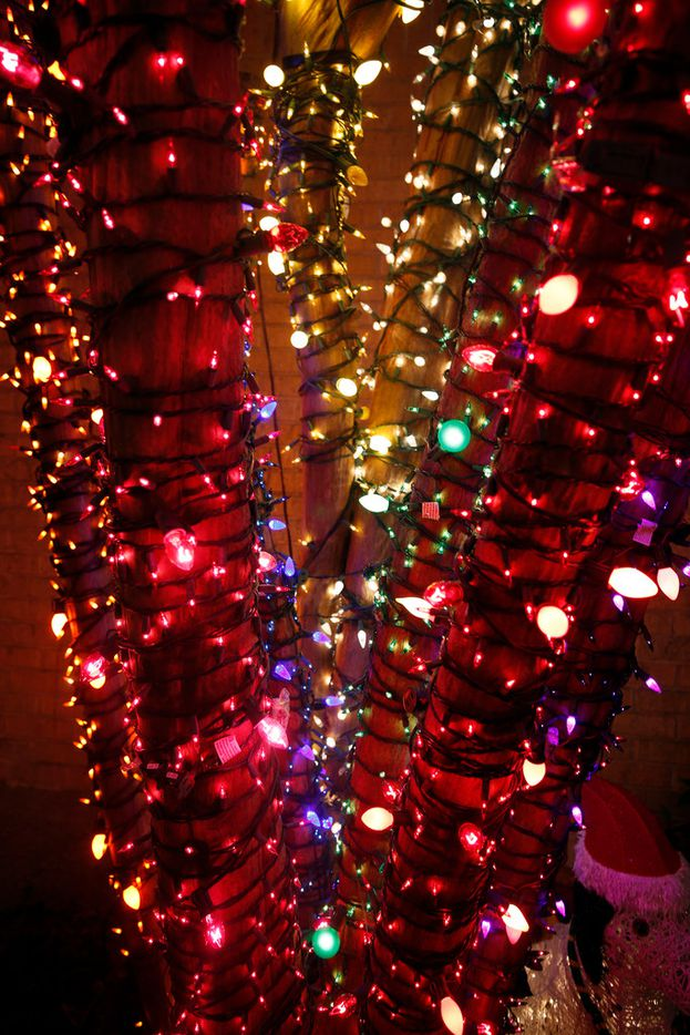 """Trees, wrapped in lights at theme of Liz Simmons, at 714 Newell Ave in Dallas on Dec. 16, 2018. The extravagant Christmas display, called """"Electric Lizzy Land"""" will be viewable through the end of the year.(Michael Ainsworth/Special Contributor)"""