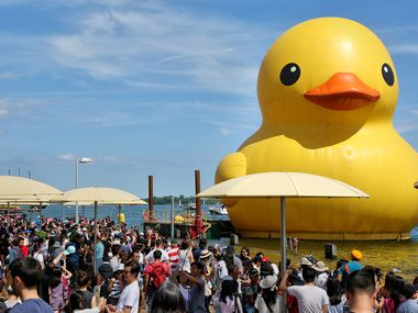 The giant rubber duck appeared in Toronto on July 3, 2017. The duck, created by Dutch artist Florentijn Hofman, will be re-created in Fort Worth this month.