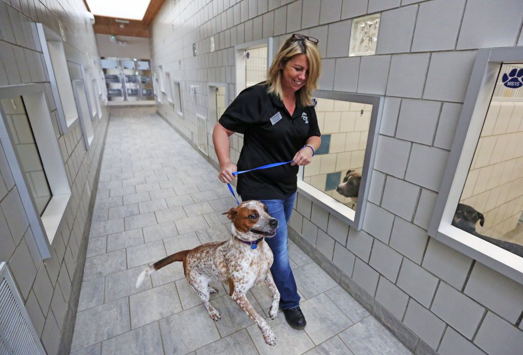 Operations Supervisor Tammy Roberts and Diva enjoy some quality time at the Grand Prairie Animal Shelter, photographed on Tuesday, August 16, 2016. The shelter is teaming with the Dallas County Jail to provide opportunities for teaming up inmates to and dogs, for the benefit of both. (Louis DeLuca/The Dallas Morning News)
