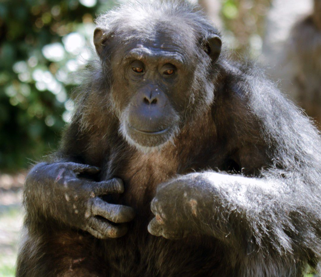 Kirk, 31, was known for loving carrots and energetically galloping around his habitat, the Dallas Zoo said.