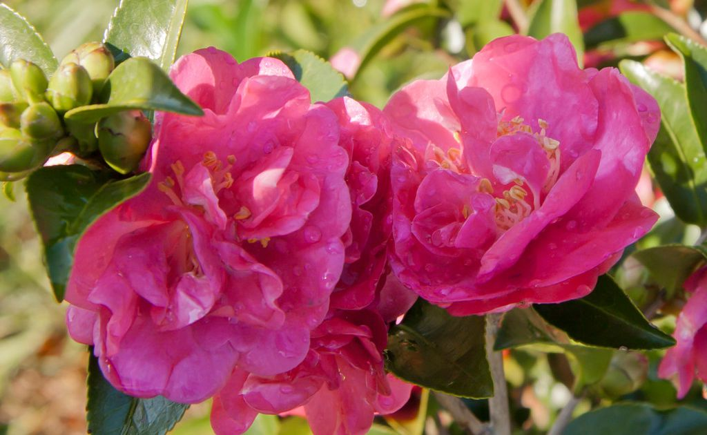7 Plants That Will Add Winter Color And Interest To Your Texas Garden