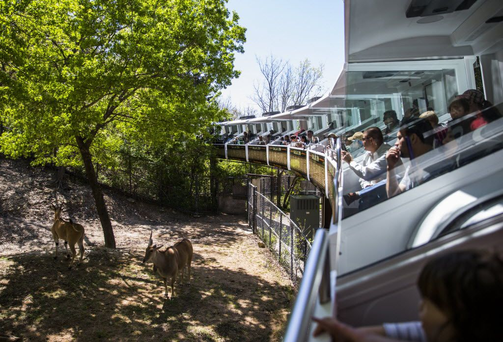 People view animals from air-conditioned cars during a preview ride of the Dallas Zoo's renovated monorail on March 24. The monorail has been closed since 2014 when it stalled, trapping people on the tracks. The zoo attributed part of its success in reaching a million visitors to the reopening of the monorail.