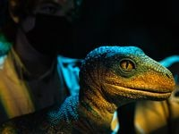 """Un bebé velociraptor es parte de la exhibición """"Jurassic World"""" en The Colony."""