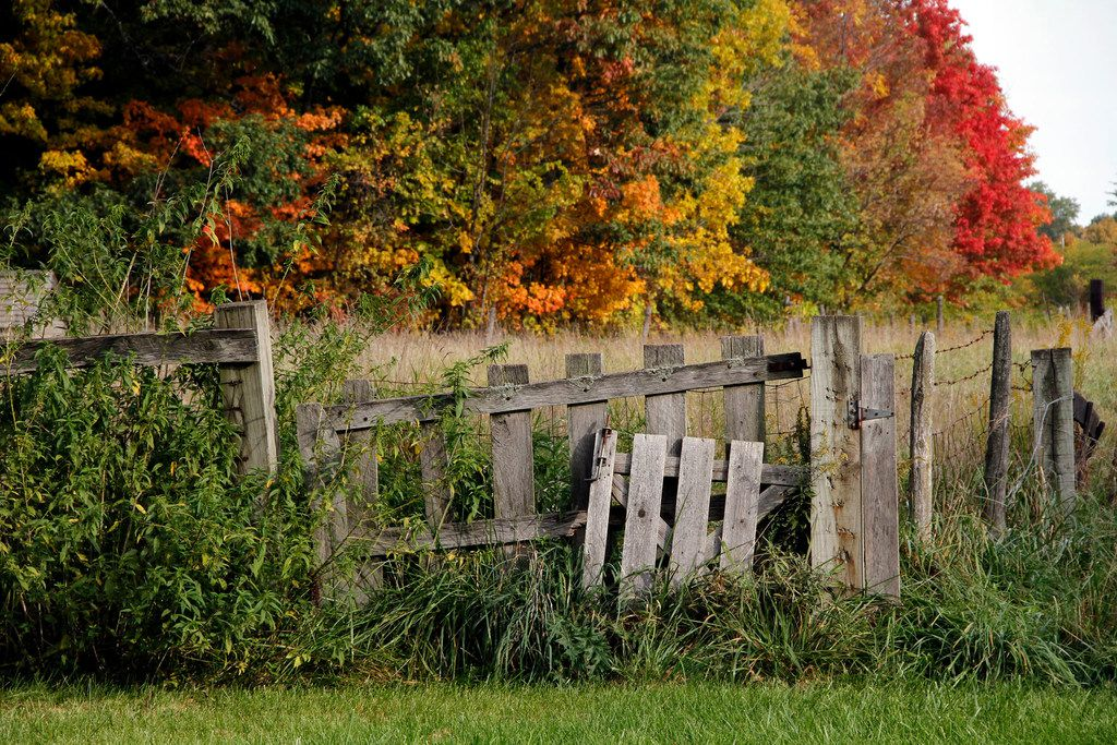 Leaves take on a range of autumn hues at Chellberg Farm, where the resident turkeys, chickens, pigs, goats and cows make for a fun stop along the nearby trail.