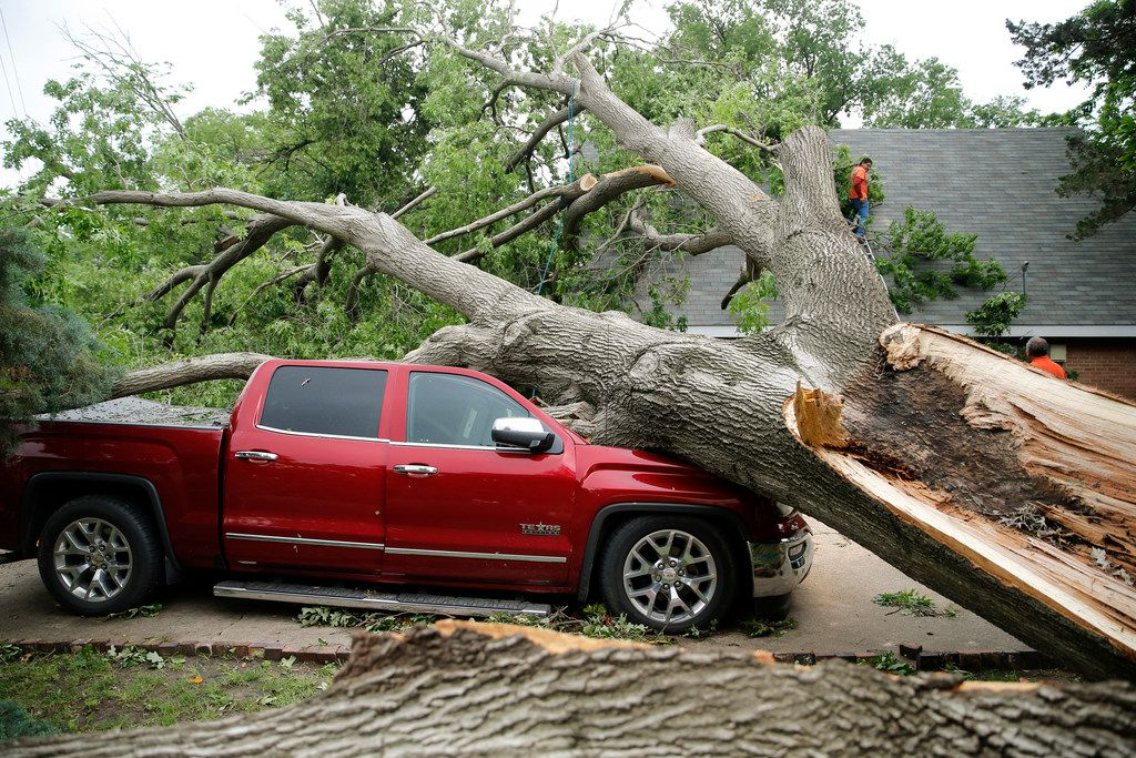 A red oak that fell as a tornado passed through Denton on April 30 crushed a pickup and punctured a hole in the roof of the house and a bedroom ceiling, letting rain pour in.