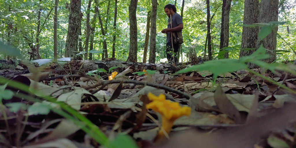 Edible mushroom expert Patrick Harris discovers a patch of golden chanterelles in a wooded area east of DFW following a heavy rain.
