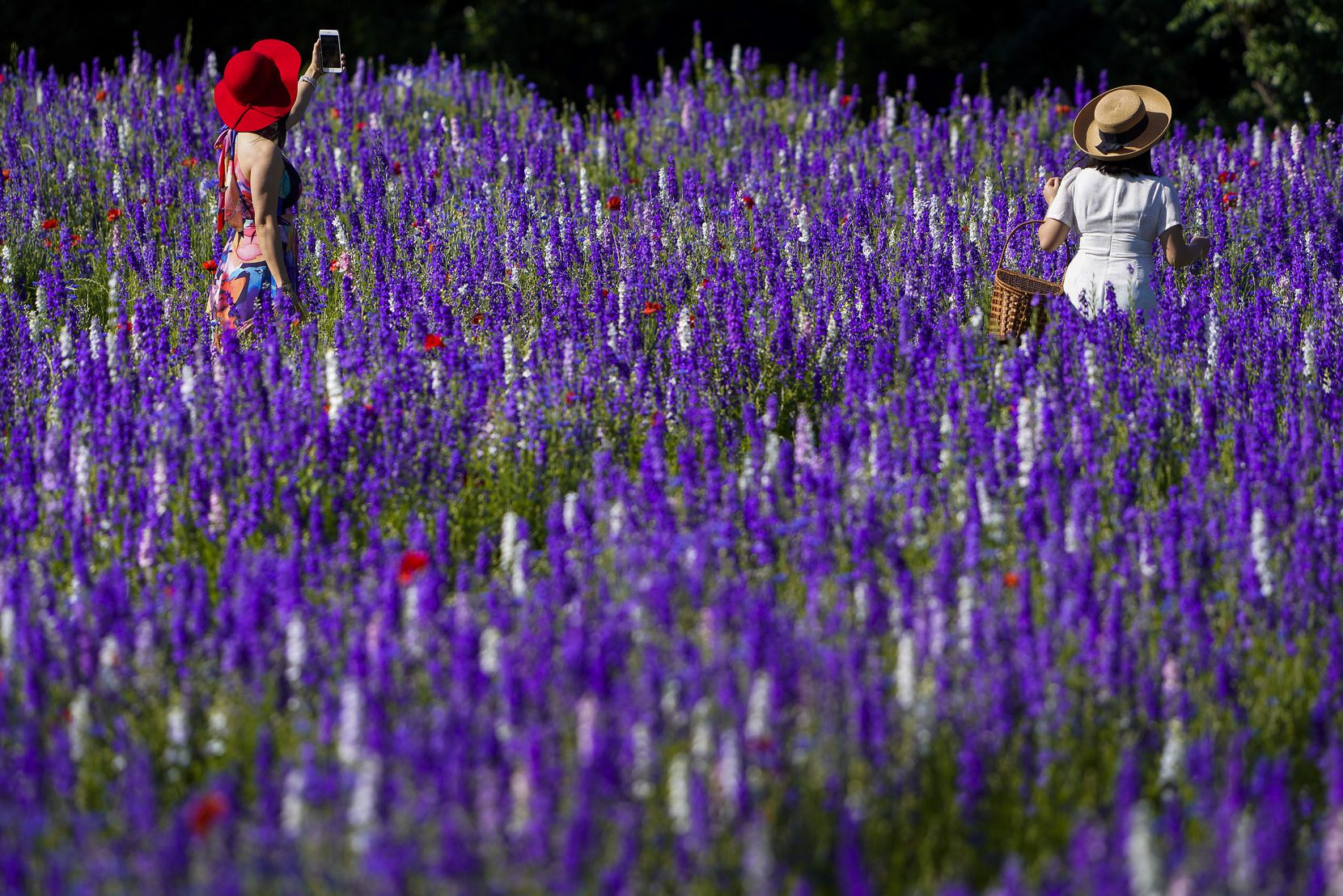 Thao Nguyen (left) and her daughter Phuong Vu walked through a field of wildflowers at Prairie Creek Park in Richardson on May 6, 2020.