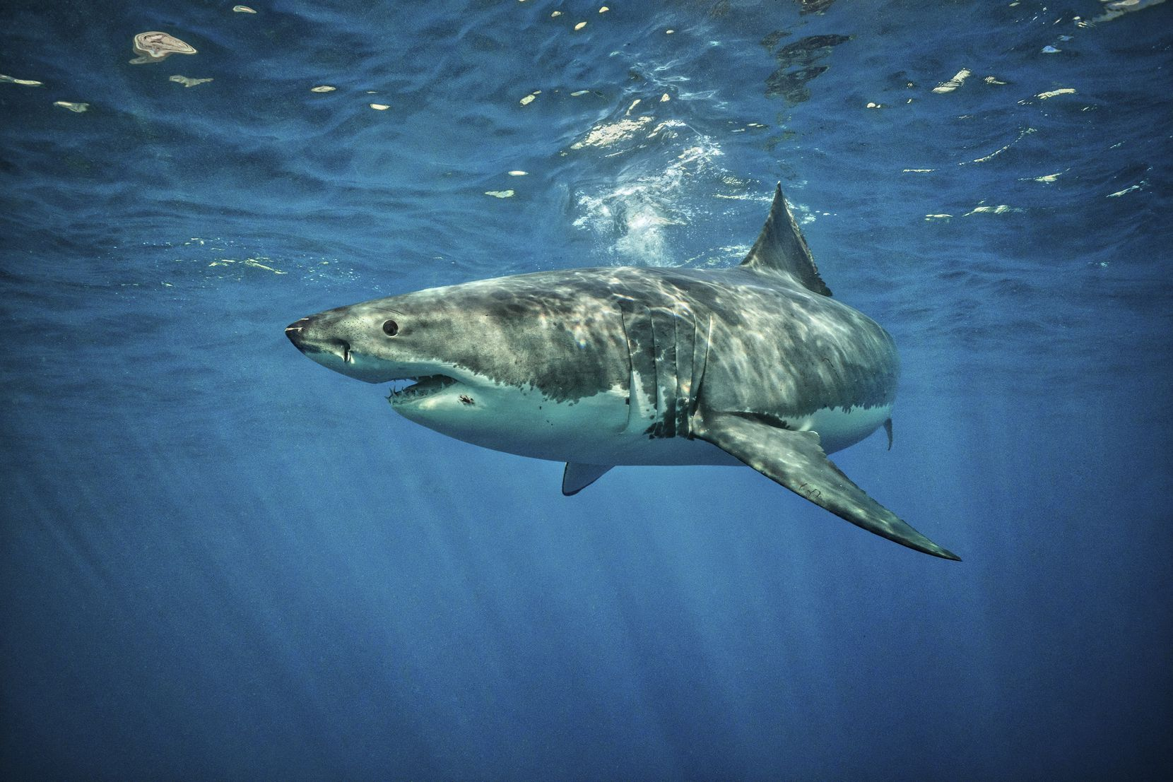 The odds of an unprovoked shark attack are about 1 in 11.5 million, says the Florida Program for Shark Research.