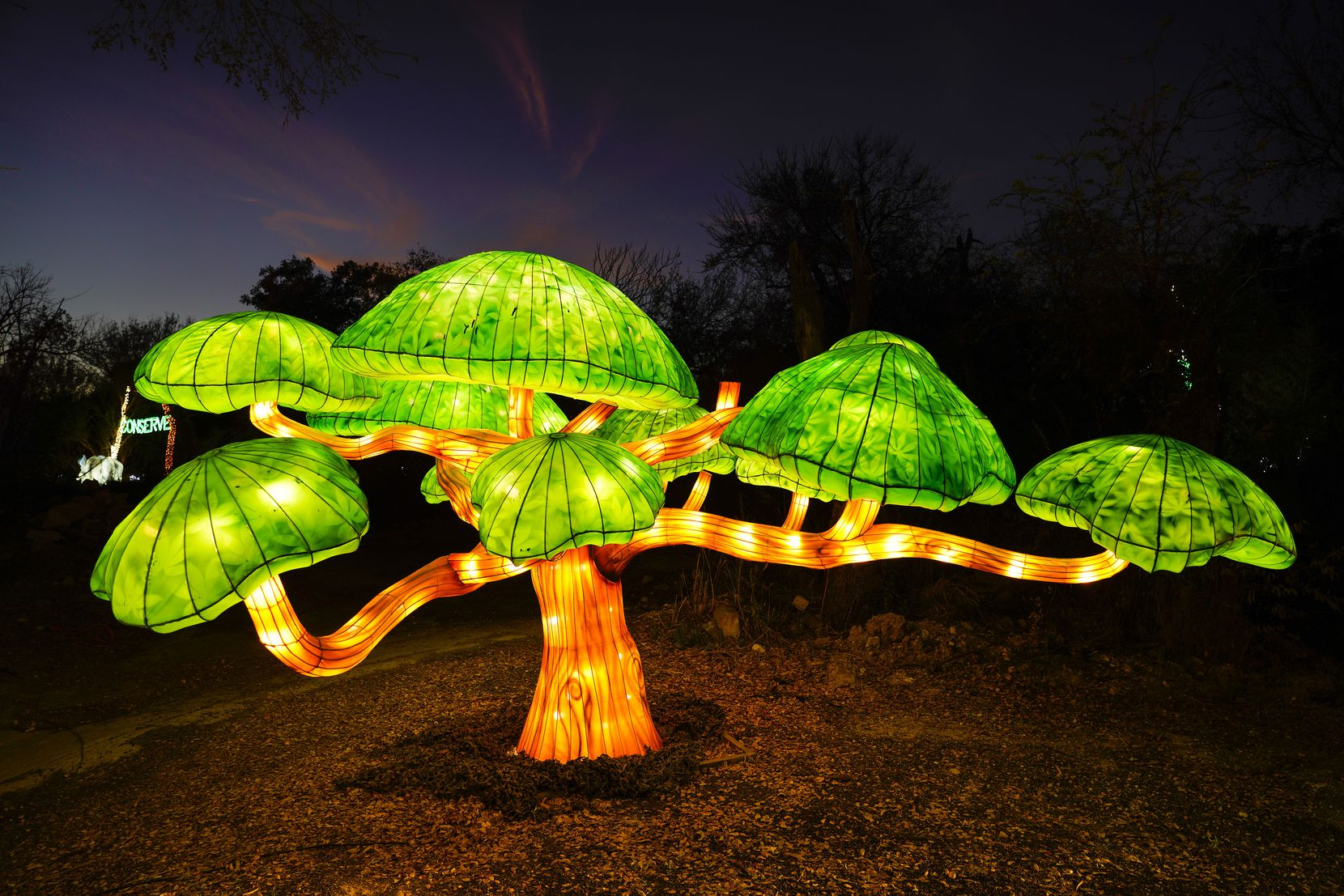 A lantern in the shape of a tree is seen along the side of the route during Dallas Zoo Lights on Wednesday, Nov. 18, 2020, in Dallas. The Dallas Zoo?s display of one million lights and silk-covered, animal-shaped, lanterns is presented as a drive-through this year.  (Smiley N. Pool/The Dallas Morning News)