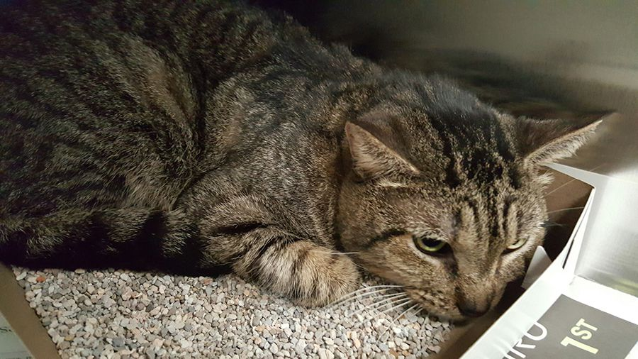 One of three cats who were abandoned in a home by a vacating family.