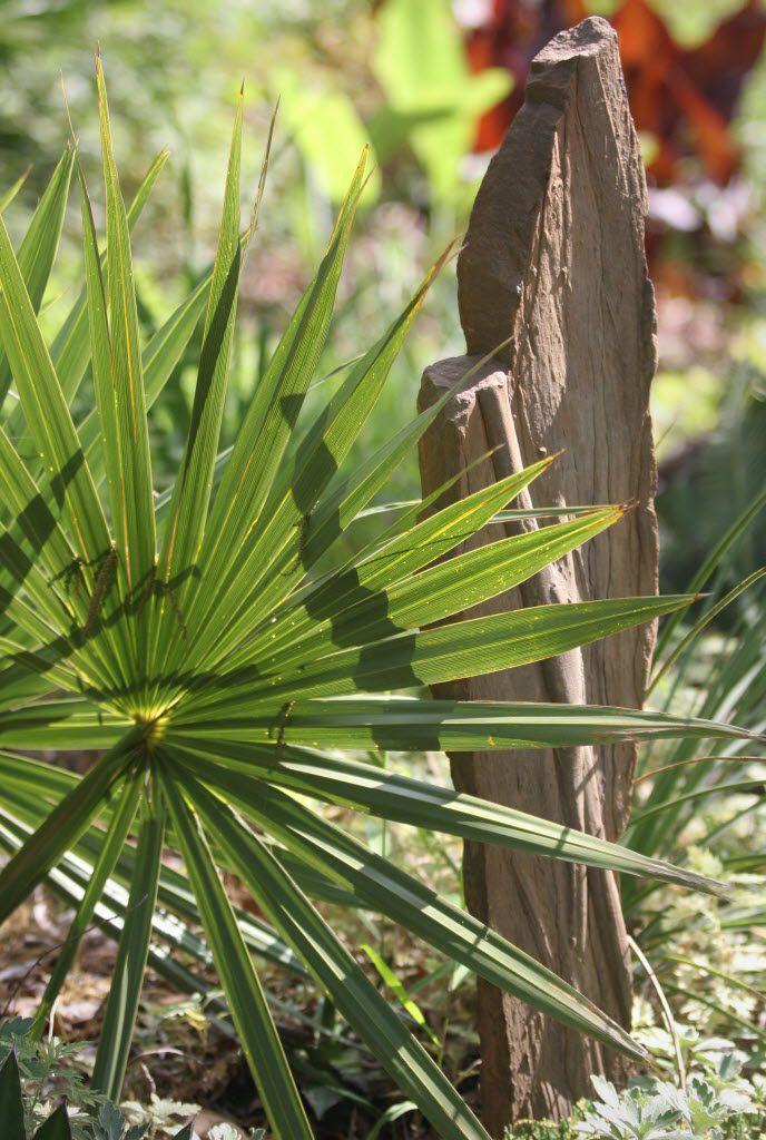 A sabal palm can be a good barrier plant.