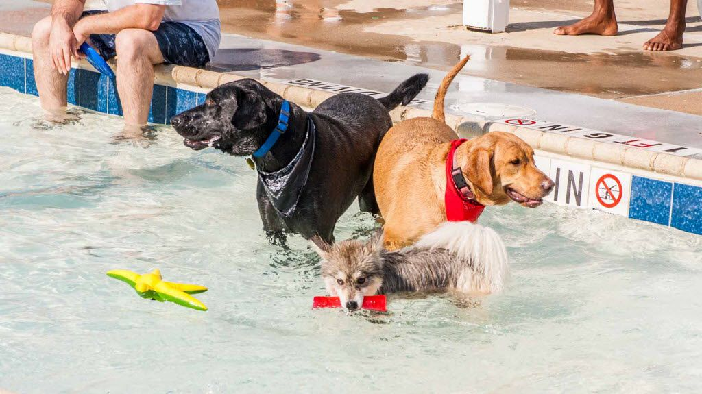 Dogs take a dip at Paws in the Pool-ooza day at Cedar Hill's Crawford Park Pool.