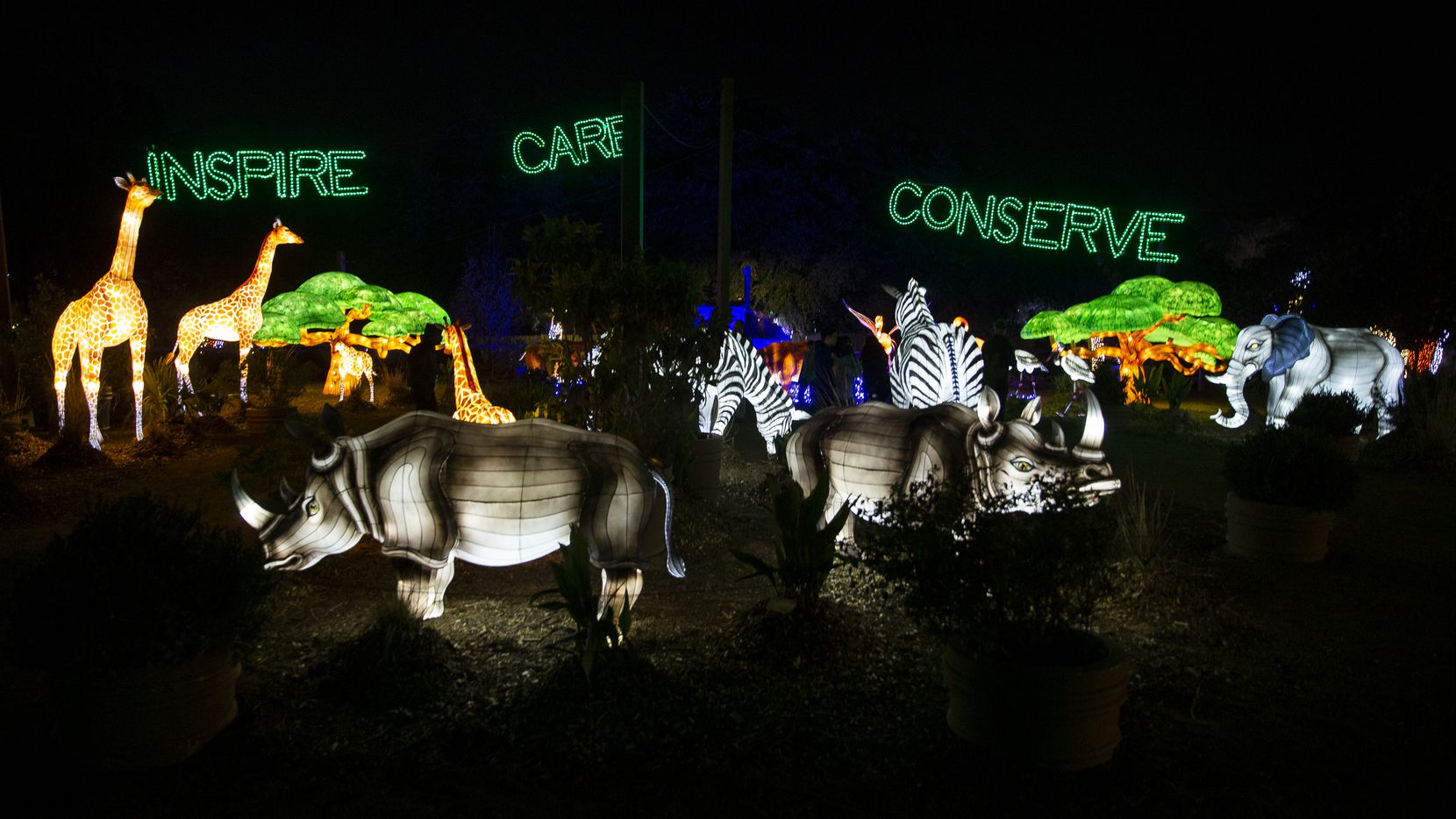 The Dallas ZooÕs replicated watering hole on Nov. 16, 2019 in Dallas. The zooÕs ZooNorth section features lighted displays and one million lights on select nights through Jan. 5.