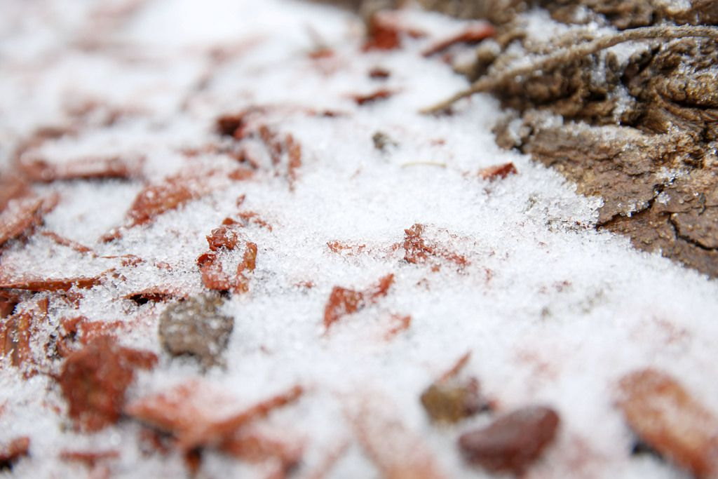 A wintry mix of ice and snow starts to stick to the ground in McKinney, Texas Saturday January 11, 2020. (Brian Elledge/The Dallas Morning News)