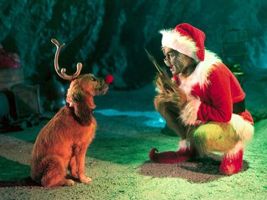 Dog About Town Sipping With St Nick And More Things To Do With Your Pooch