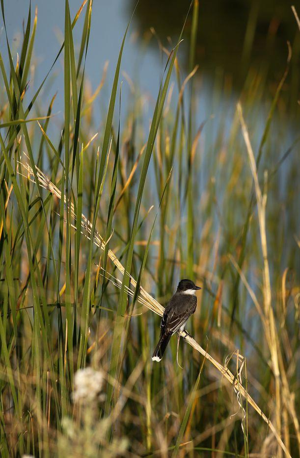 Pickens turned the Mesa Vista Ranch into a wildlife habitat.