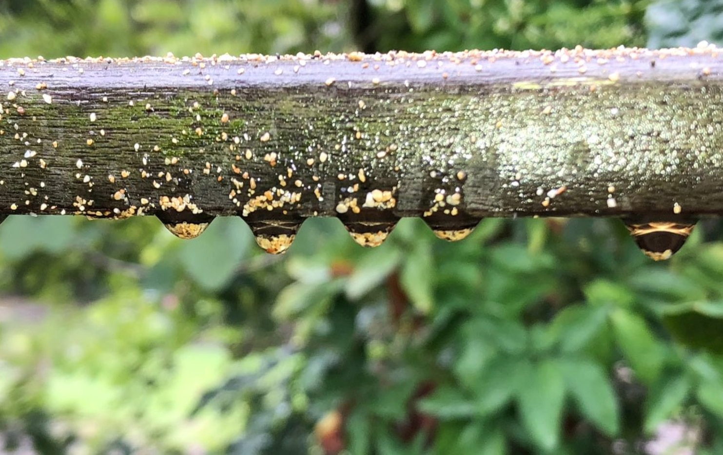 The surface tension of these raindrops is strong enough to keep grains of sand clinging to this twig.