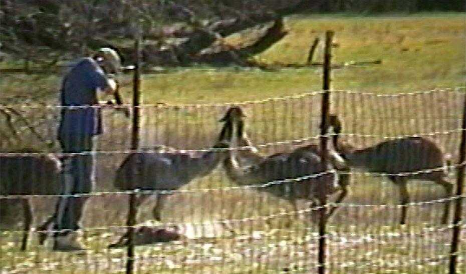 A still image from a video shows Joe  Schreibvogel shooting an emu.