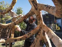 Artist Giovanni Valderas adds glue to a giant skeleton sculpture in his backyard in Dallas on Friday, Oct. 30. The sculpture is made of newspaper, glue and chicken wire, and will be part of a Dia de los Muertos style protest against the government response to COVID-19 on Nov. 1.