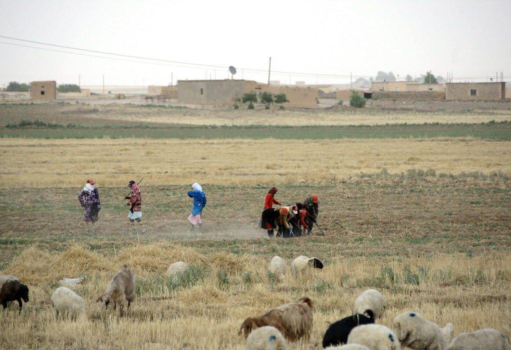 Syrian women till the fields in a drought-hit region northeastern Syria, in 2011.