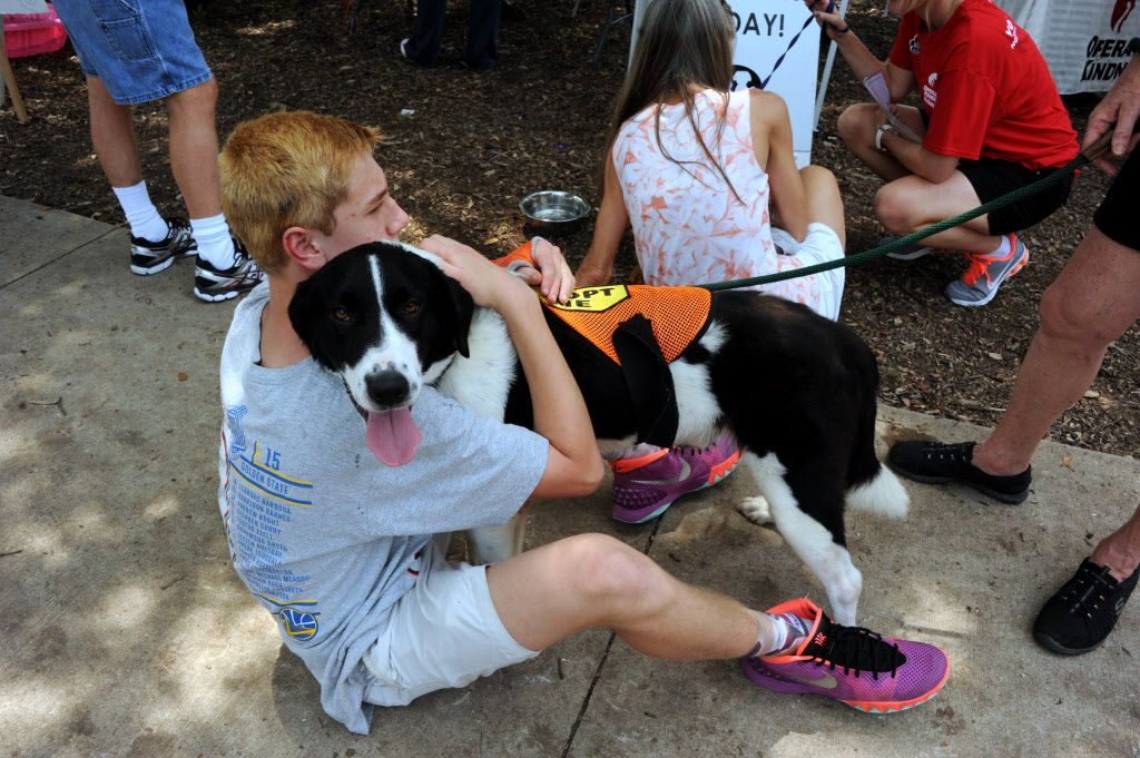 An adoptable dog receives hugs at the 21st annual Dog Day Afternoon at Flagpole Hill in Dallas, TX on June 6, 2015.