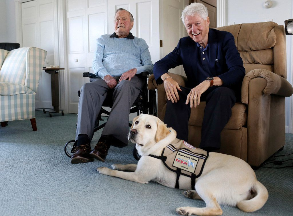 Former Republican President George H.W. Bush (left) and his visitor, former President Bill Clinton, sit with Sully, a yellow Labrador retriever who'll be Bush's first service dog at his home in Kennebunkport, Maine. The 94-year-old and his new companion got acquainted Monday, June 25, 2018, at the Bush family compound on the coast of Maine.