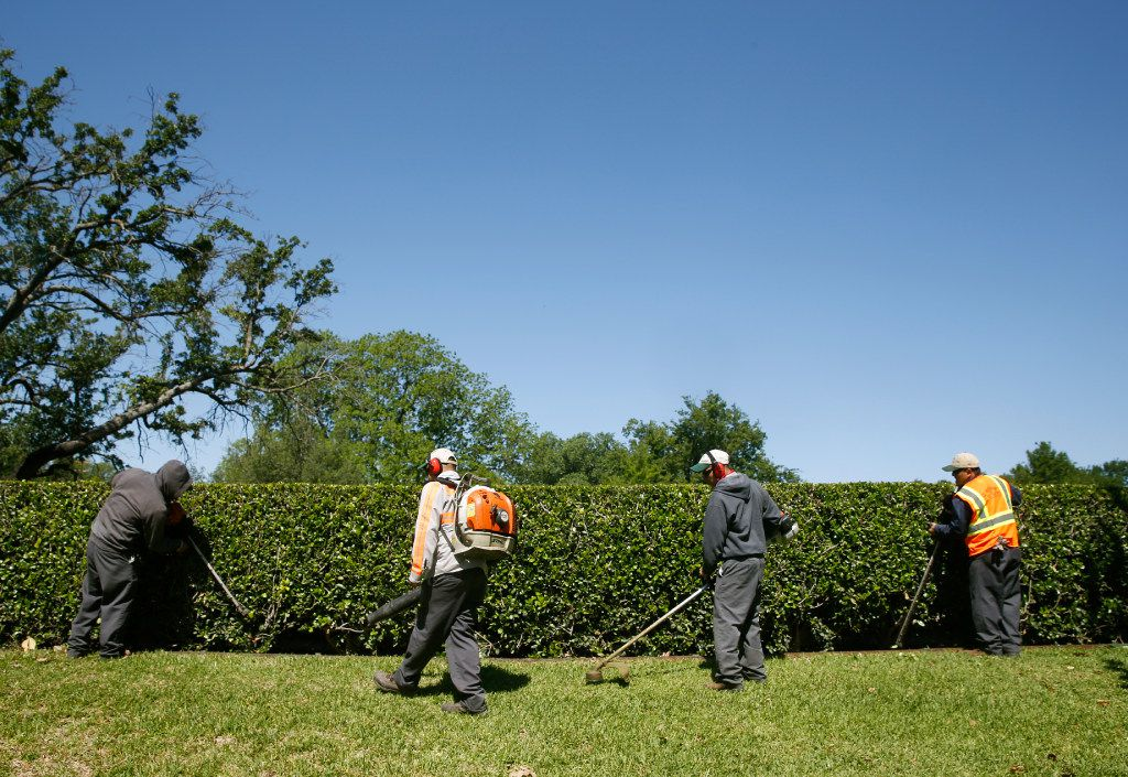 Workers on H-2B visas trim up a neighborhood entryway in North Texas. Companies use the visas to recruit seasonal workers for landscaping, food preparation, construction and other manual work. In 2019, Texas led all states with over 16,000 positions certified for H-2Bs.