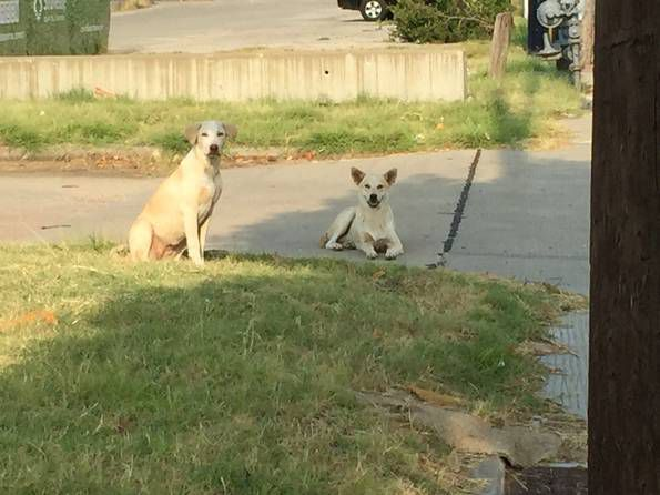 This abandoned pair of dogs hung out along Singleton near Sylvan for weeks. (Jonnie England photo)