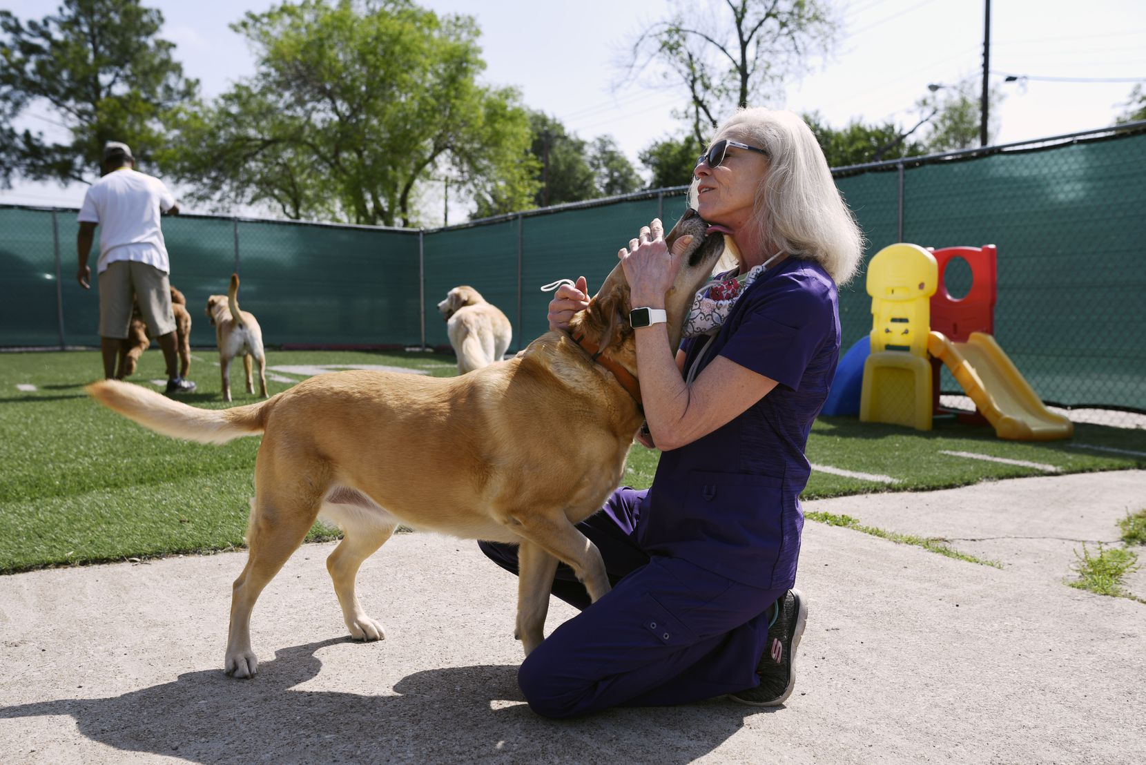 Tammy Godfrey, owner of PawTenders, was greeted by a dog named Bella as she visited with her clients at the boutique dog day care in Dallas on April 21. Godfrey's business has declined since the coronavirus outbreak. They are used to seeing 20 to 25 dogs a day but now average in the single digits. She also had to lay off a staff member who assisted in picking up dogs for day care. (Ben Torres/Special Contributor)