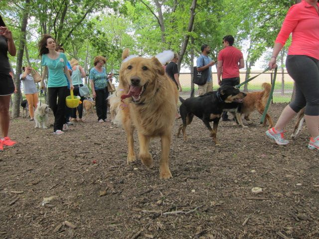 All friendly dogs are welcome at Golden Retriever Rescue of North Texas' egg hunt Sunday.