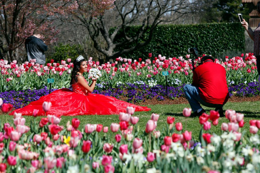 Lizet Mendez, 14, left, has her quincea–era photos made around a bed of flowers in the Margaret Elisabeth Jonsson Color Garden, during the Dallas Blooms: Peace, Love and Flower Power, at the Dallas Arboretum, Friday morning, Feb. 24, 2017 in Dallas. Ben Torres/Special Contributor