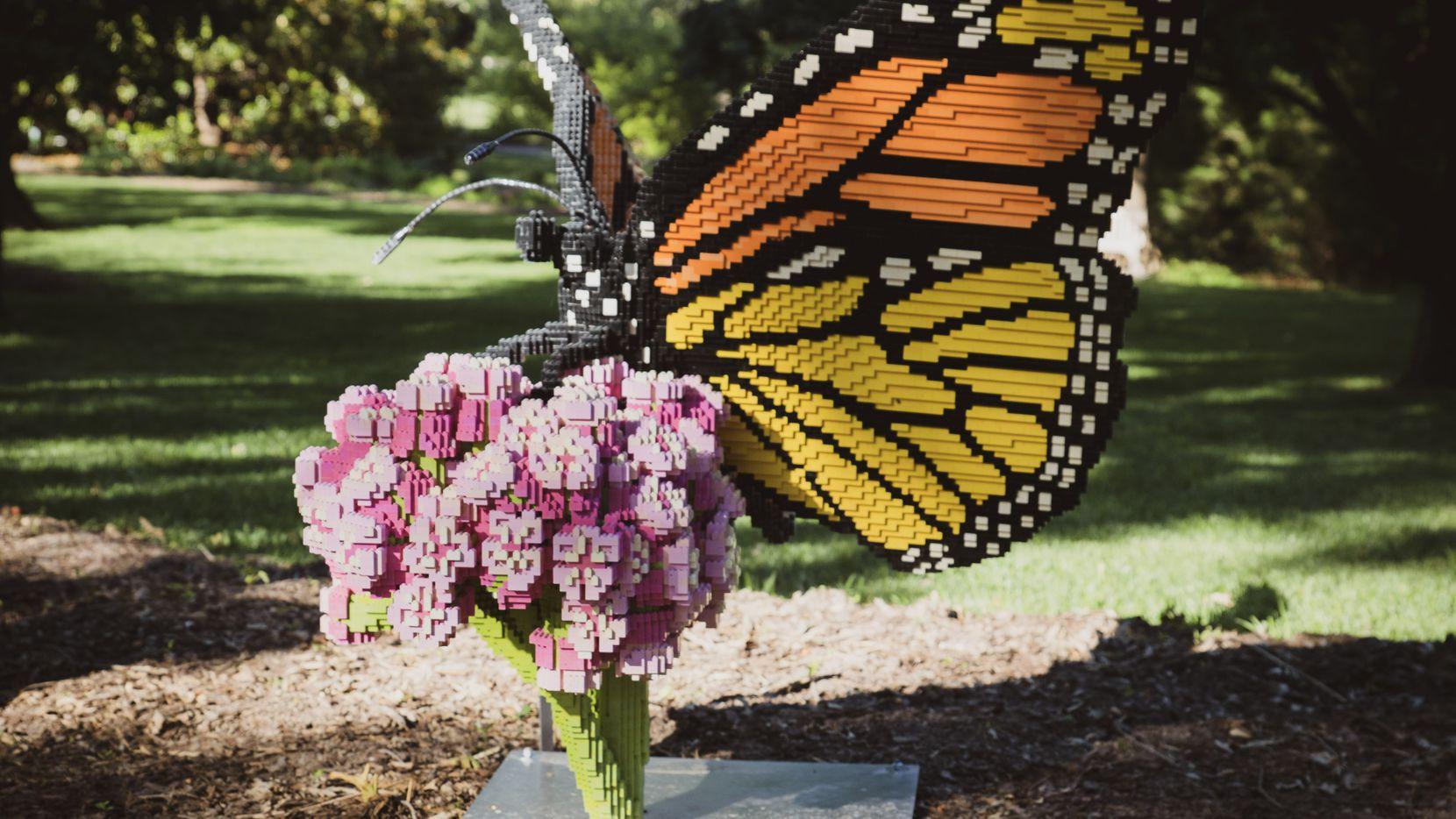 El jardín botánico de Fort Worth invita a las familias a celebrar y aprender de la migración de las mariposas monarcas este sábado 2 de octubre.