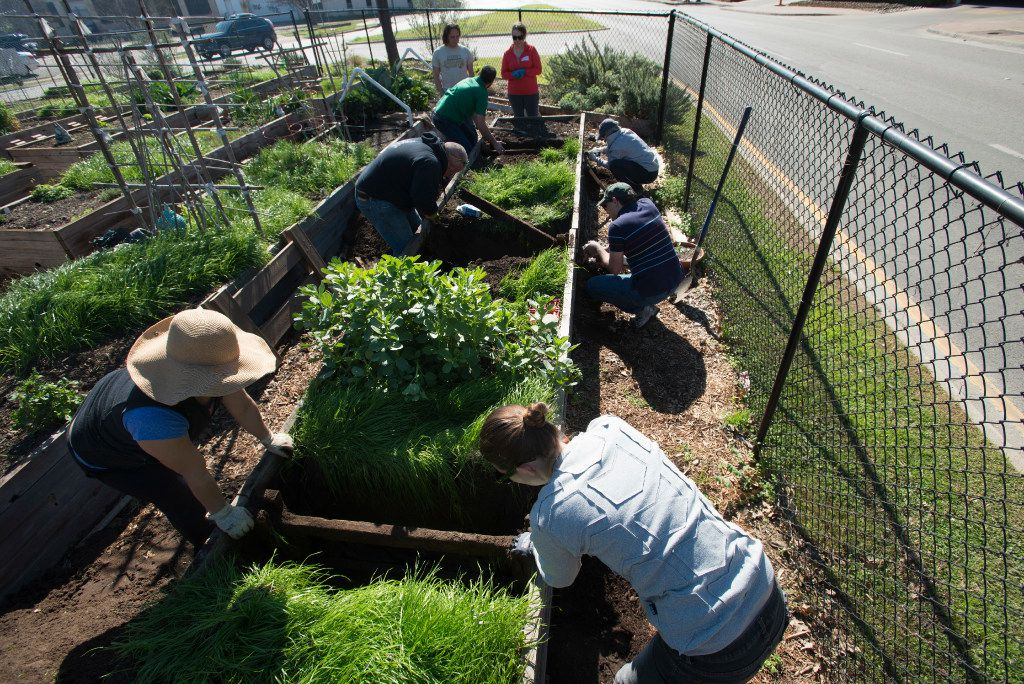 Eight members of the Deep Ellum community work to repair one of the raised beds at Deep Ellum Urban Gardens on Canton Street in Dallas.