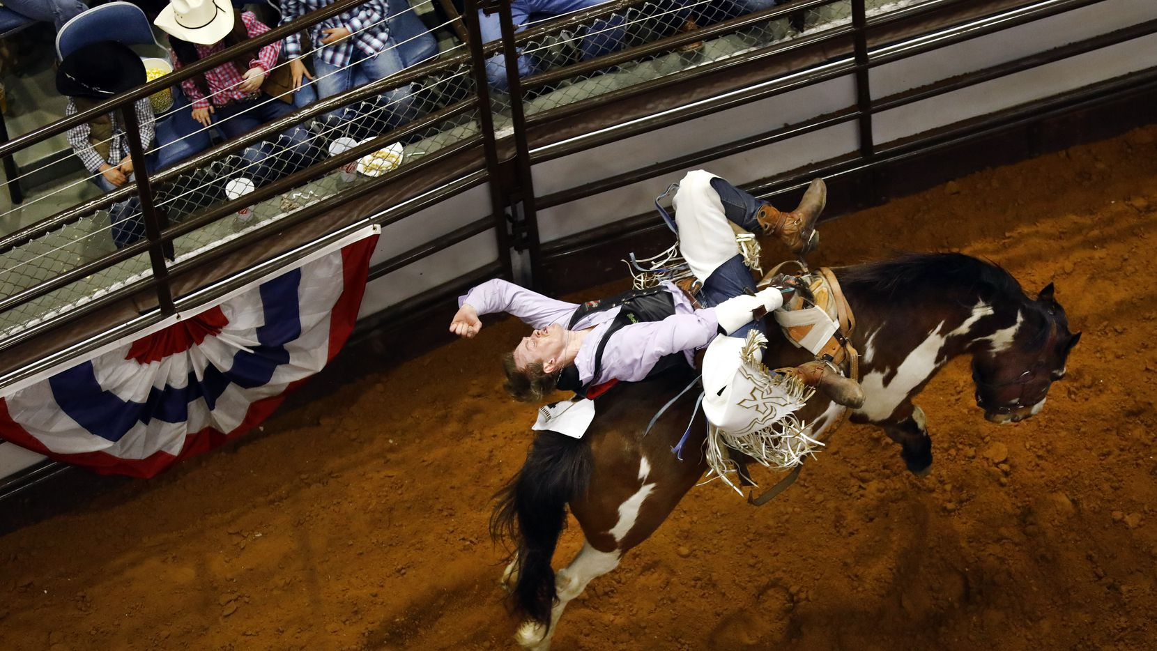 Bareback riding horse Jeopardy tries to buck off contestant Wyatt Bloom, of Bozeman, MT, during a matinee performance at Will Rogers Memorial Coliseum, Friday, February 1, 2019 at the Fort Worth Stock Show and Rodeo in Fort Worth.
