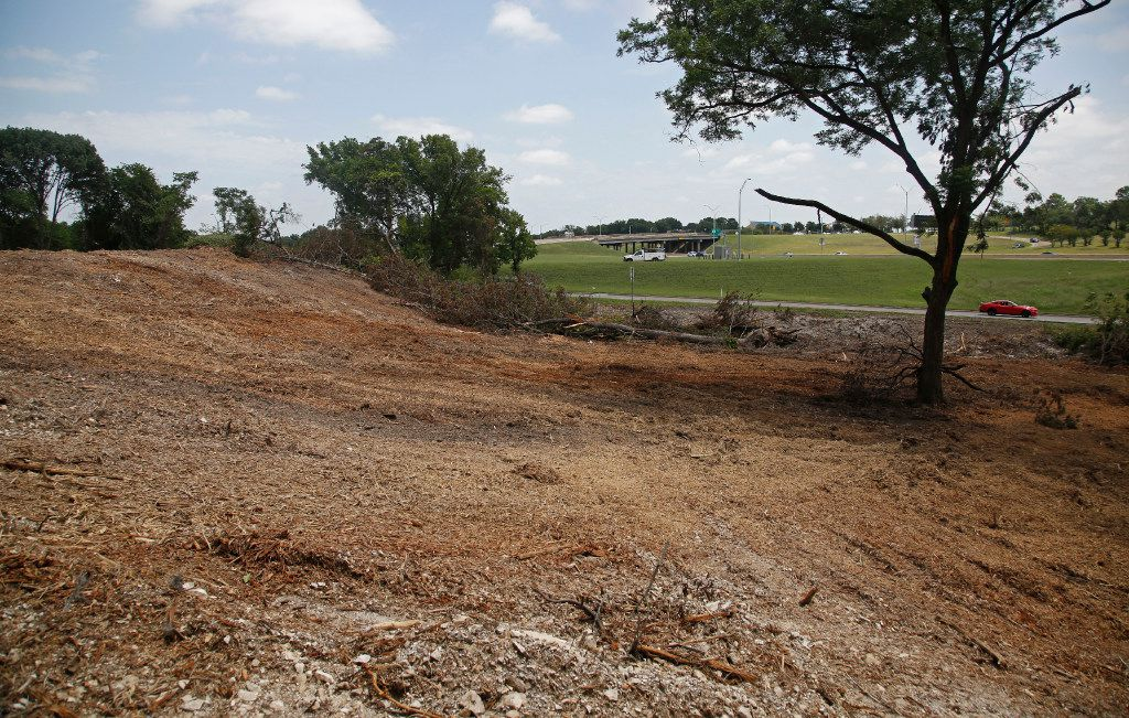 A deep bed of mulched trees fills a lot where dozens of trees were cut down by the owner of the property at the southwest corner of U.S. Highway 67 and Ledbetter Drive in south Oak Cliff. The demolition of the trees was halted by the city of Dallas because the property owners did not have permission for the demolition.