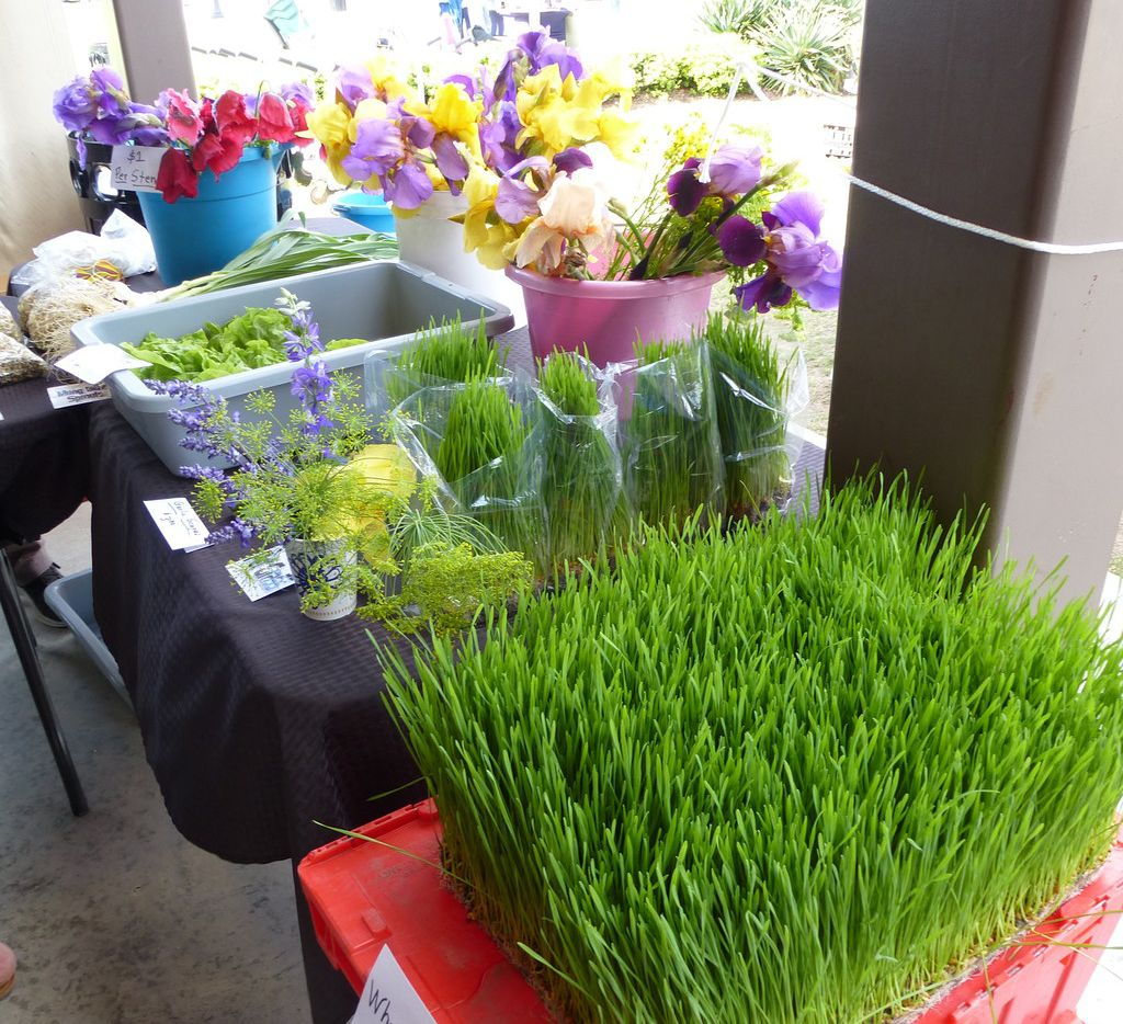 At Cardo's Sprout Farm at Coppell Farmers Market, goodies range from whea grass (foreground) to a rainbow assortment of cut irises.