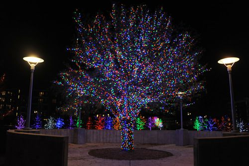 Ver las luces navideñas en Vitruvian Park en Addison es gratuitio para el público. (ALEXANDRA OLIVIA)