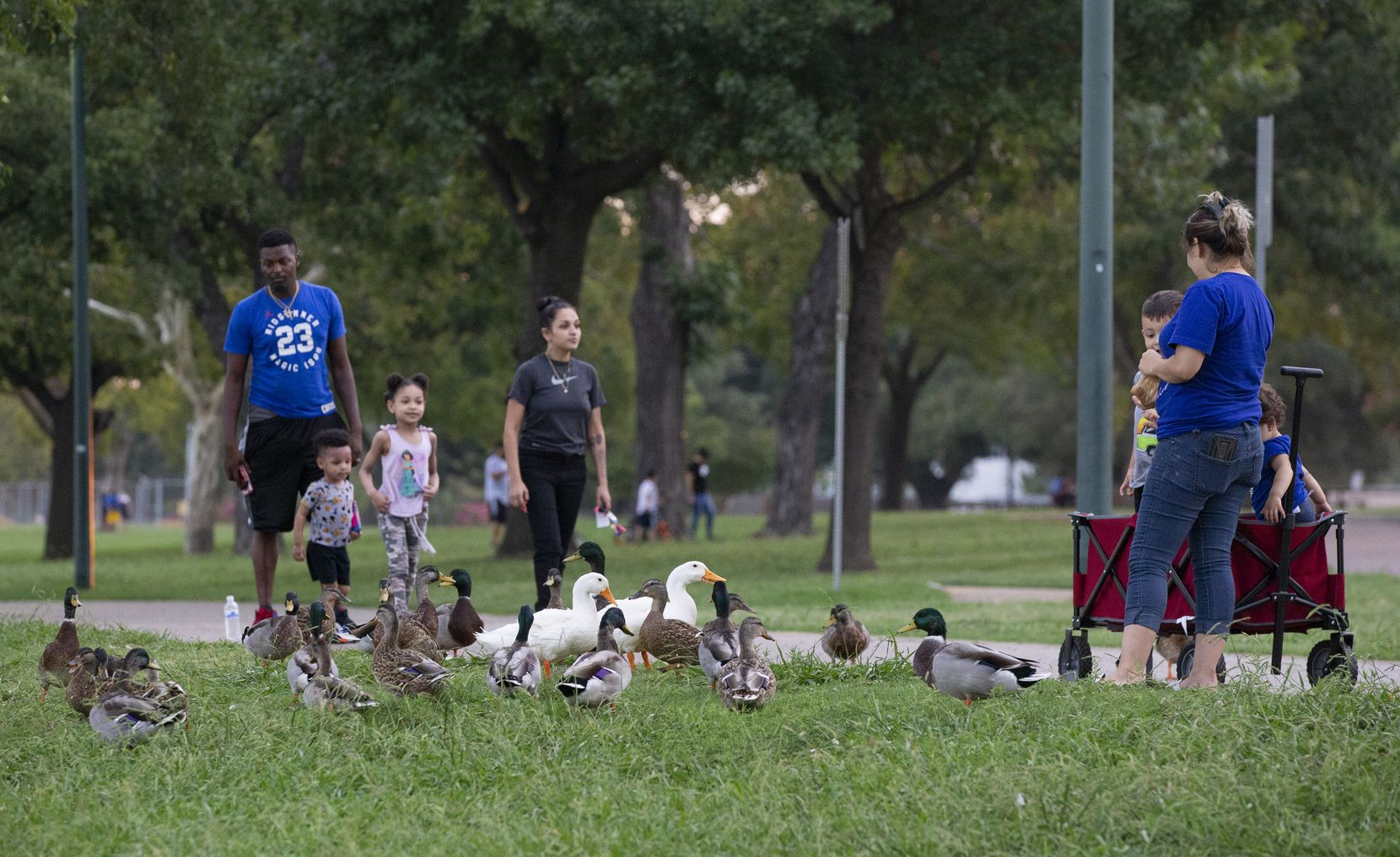 Families watch the ducks on the northern side of Bachman Lake Park. The park attracts people from all walks of life, including walkers, runners and bikers as well as rowers and anglers.