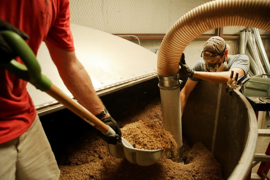 TexMalt co-founders Chase Leftwich (left) and Austin Schumacher remove finished barely from a kiln.
