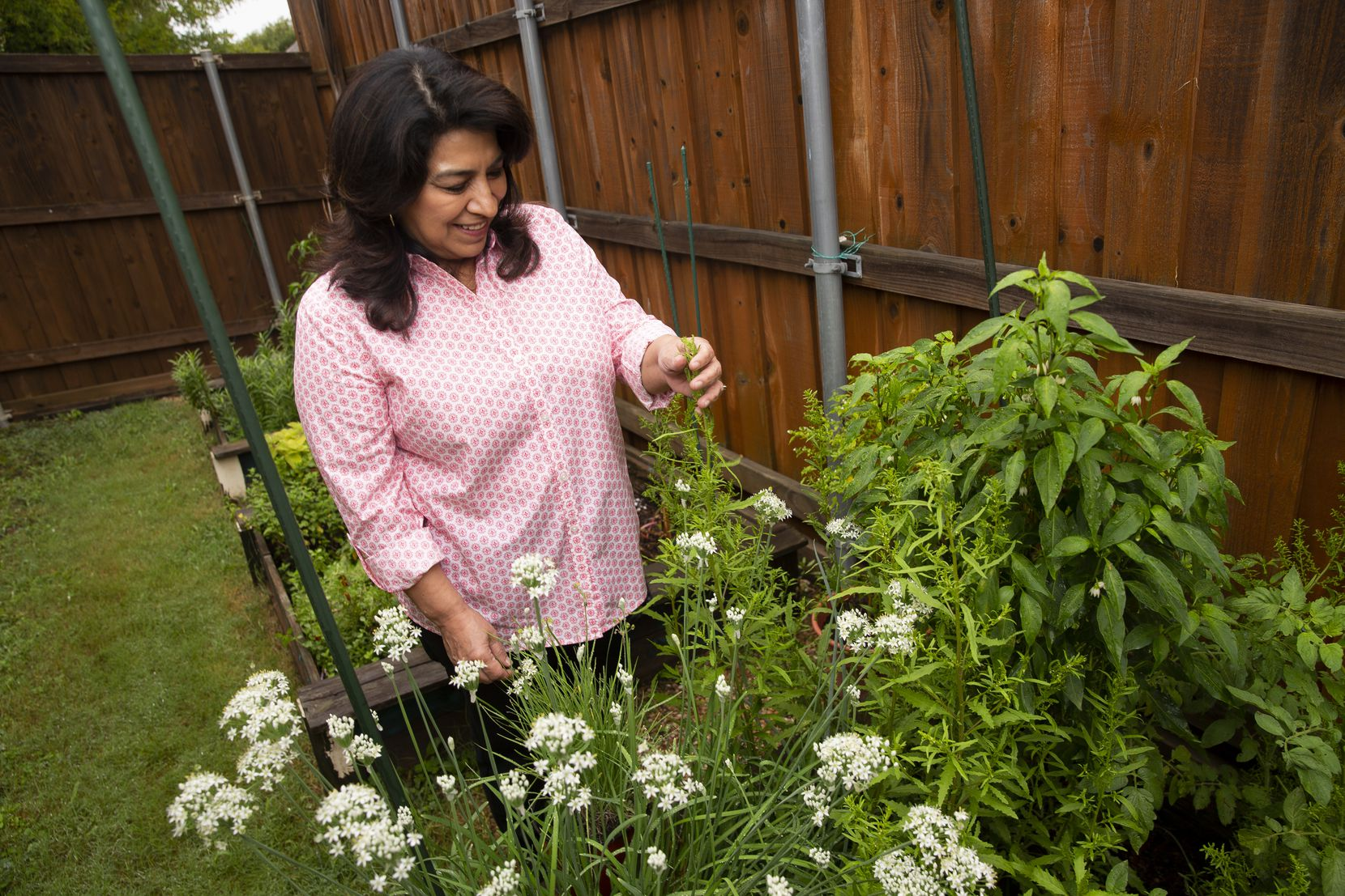 Local author Mely Martínez looks at the epazote, an aromatic herb from Mexico, growing in her backyard garden on Sept. 10, 2020, in Frisco.