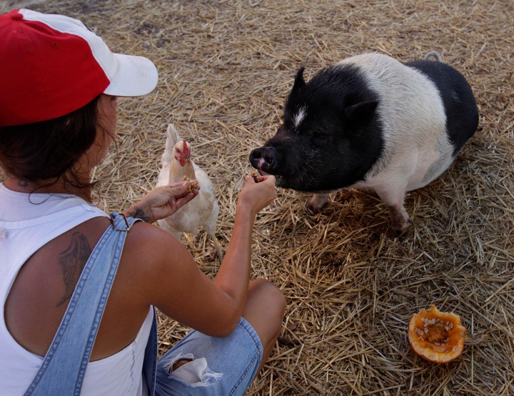 Mona Fleming, left, feeds some granola and a pumpkin to Lola the pig and a chicken at Lola's Local Market in Melissa.