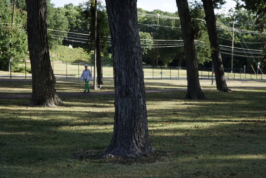 Although the pecan grove and its surrounding green space sit on Methodist Dallas Medical Center property, the hospital has long allowed the public to enjoy the parkland and use its walking trails.