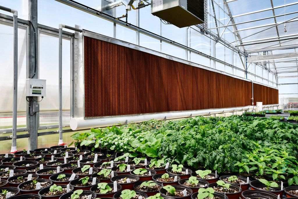 Massive swap coolers line one side of the greenhouse at the Dallas Arboretum's newest greenhouse, The Tom and Phyllis McCasland Horticulture Center in Mesquite, Friday April 05, 2019. The pads, with the help of exhaust fans, help to circulate cool air throughout the greenhouse. The pads, fans and sprinklers are controlled with the Wadsworth Control System. Ben Torres/Special Contributor
