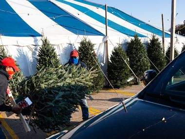 Manager Thomas Ramirez (left) and employee Benjamin Borunda load a tree onto a customer's Jeep at Patton's Christmas Trees set up at Lakewood Village shopping center in Dallas on Wednesday.