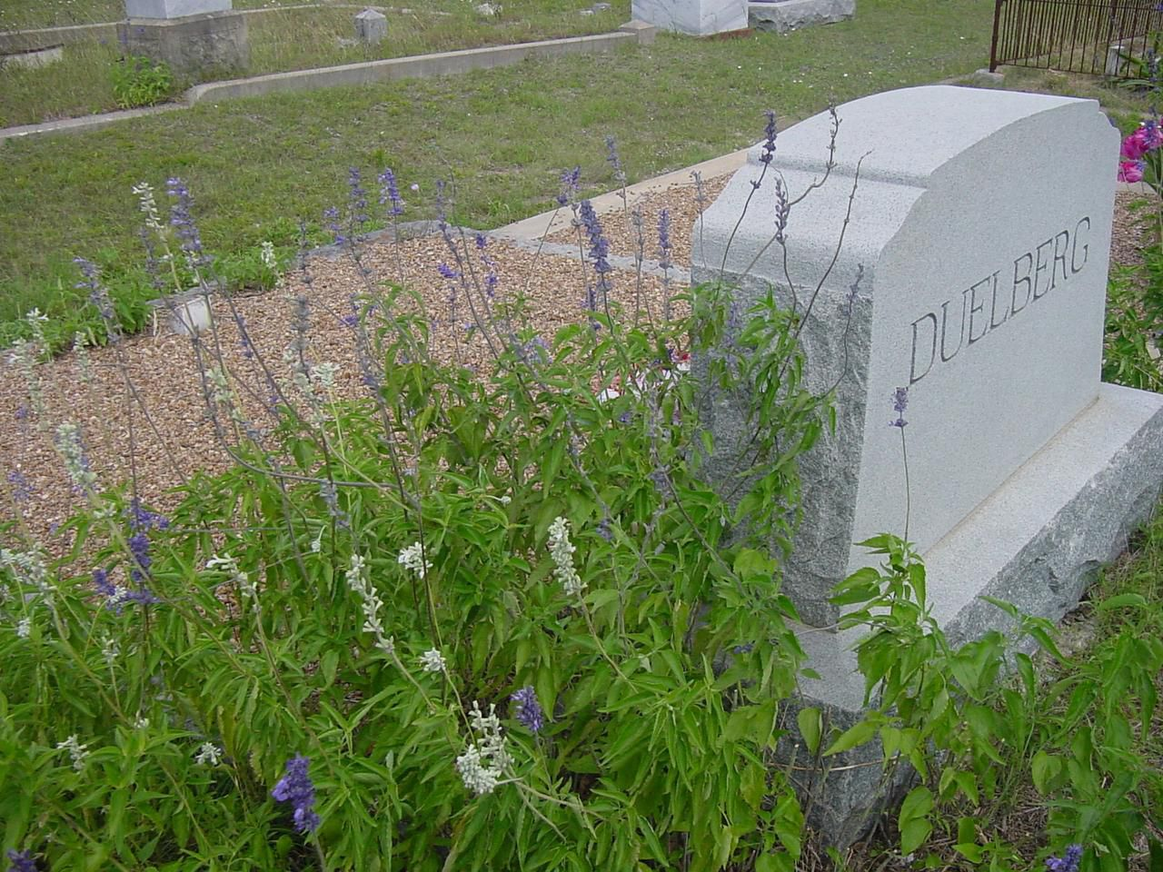 Horticulturist Greg Grant discovered the Duelberg salvias growing next to their headstone in Fayette County. He took cuttings, propagated both the blue- and white-flowered plants and tested them for several years to confirm both are Texas-tough selections.