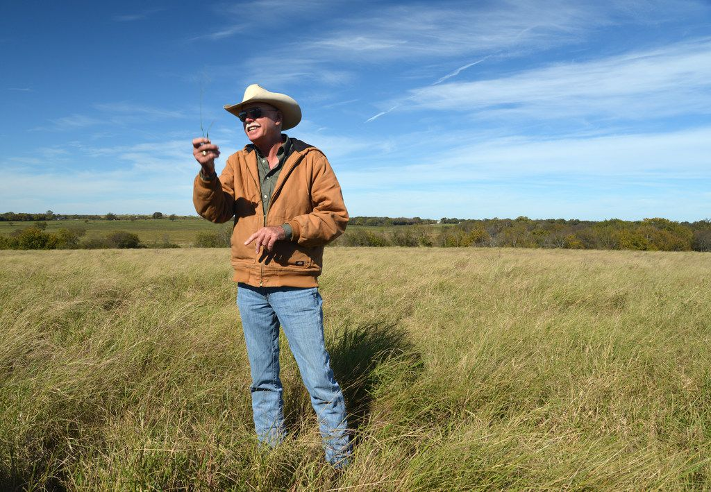 Jon Taggart holds up a sprig of silver bluestem in front of a monoculture field of kleingrass during at tour at his Burgundy Pasture Beef Ranch in Grandview. The bluestem tells him the pasture is getting healthier.