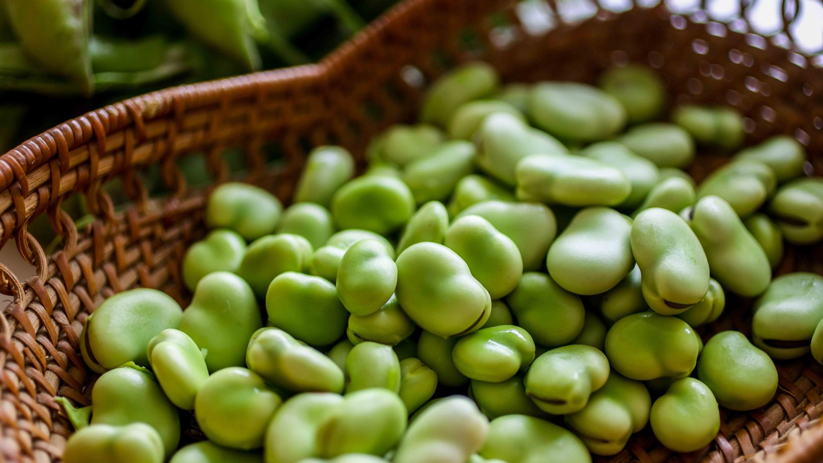 Fresh fava beans still skin on before to get blanched to make Fava Bean Purée