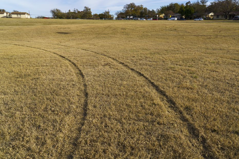 Tire tracks run through Beckley Heights Park in Dallas where a good Samaritan in a pickup ran off three dogs that attacked an elderly woman.