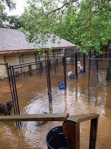 Los perros fueron rescatados luego de que varias personas pusieron mensajes en línea porque estaban a punto de ahogarse.
