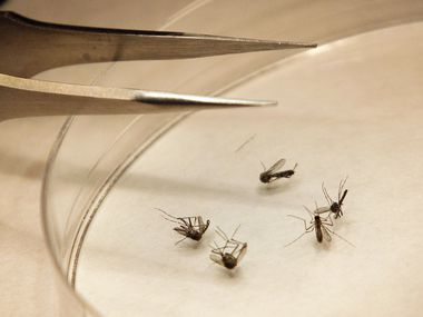 Grapevine conducted ground spraying for mosquitos after three mosquito samples tested positive for West Nile virus.